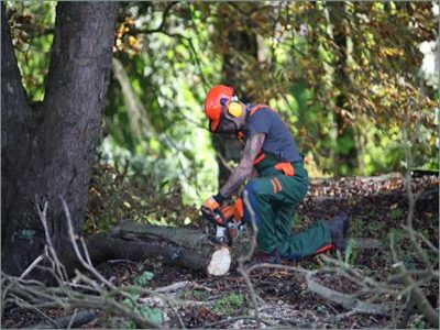 Forestry worker cutting log